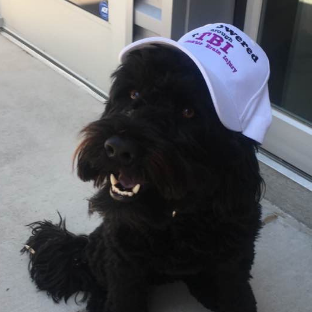 image of a black dog wearing an Empowered Through TBI hat